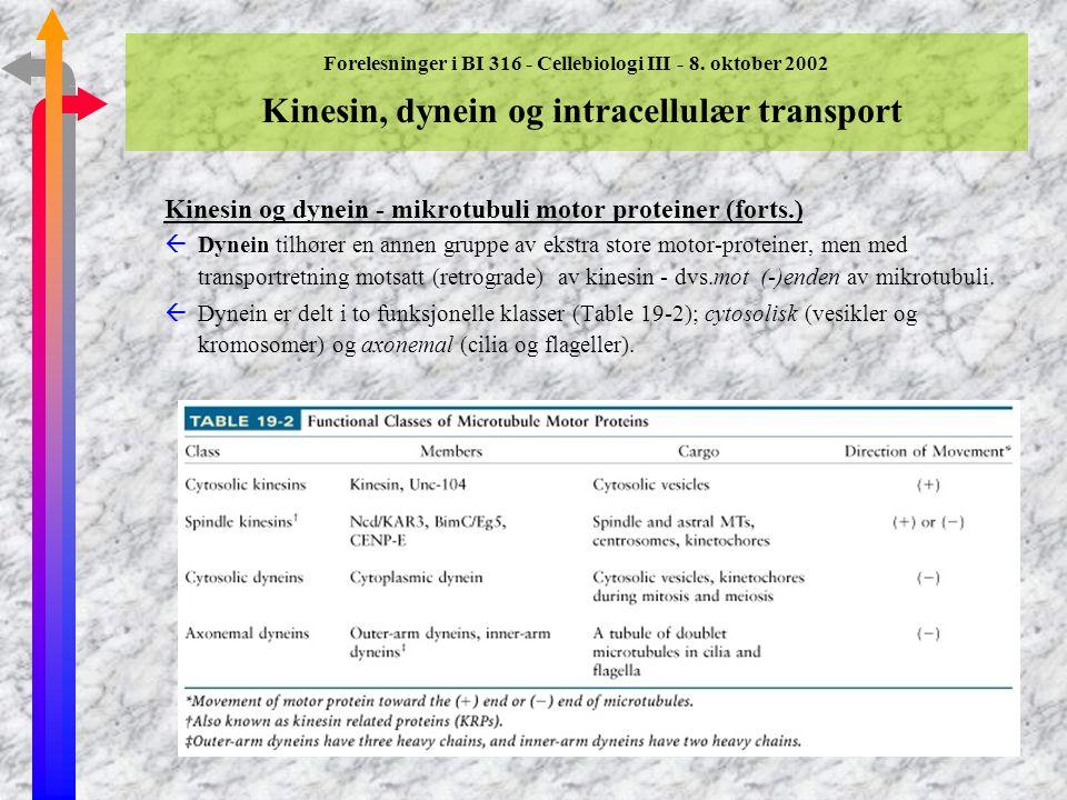 Kinesin og dynein - mikrotubuli motor proteiner (forts.)