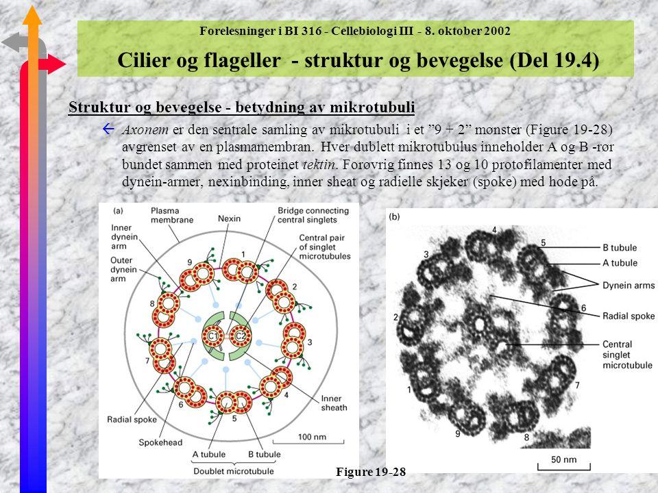 Struktur og bevegelse - betydning av mikrotubuli