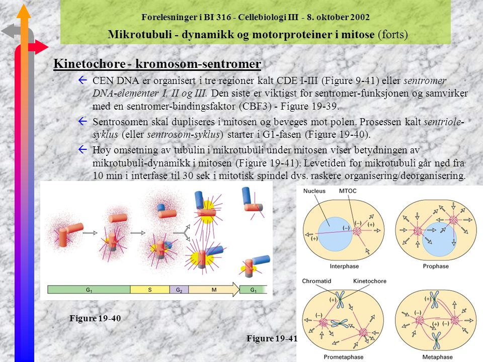 Kinetochore - kromosom-sentromer