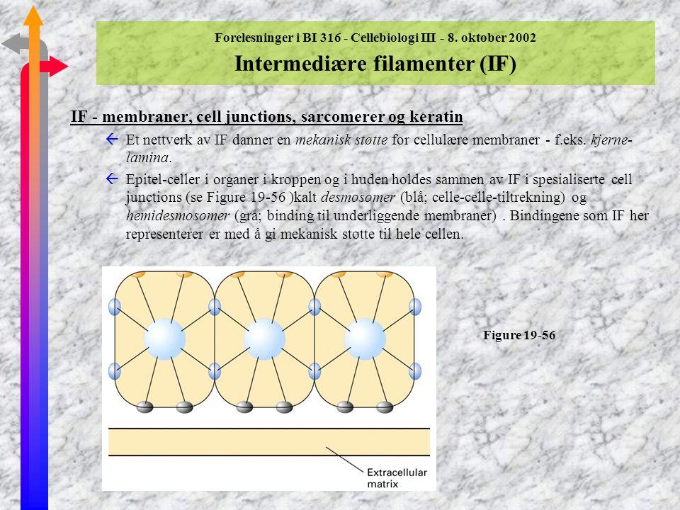 IF - membraner, cell junctions, sarcomerer og keratin