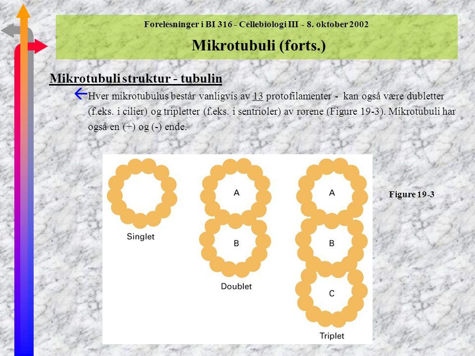 Mikrotubuli struktur - tubulin