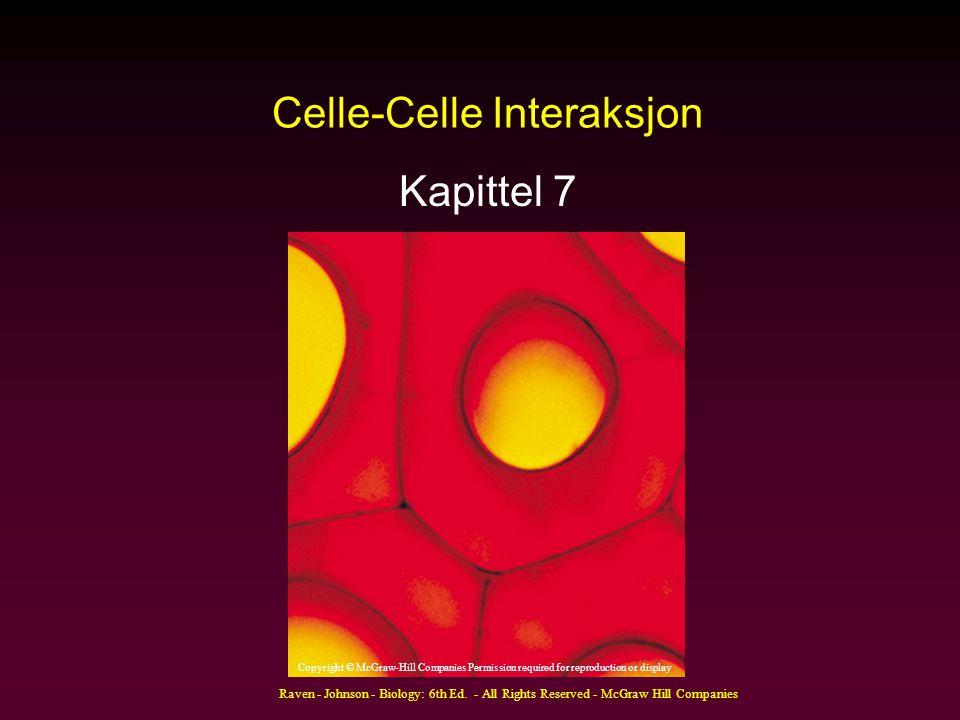 Celle-Celle Interaksjon