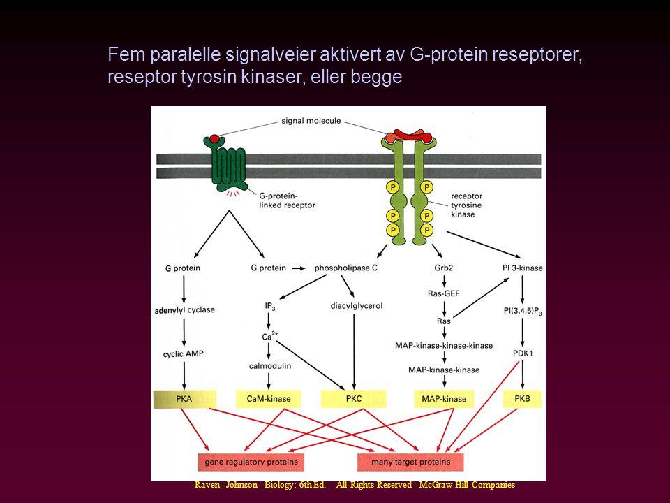 Fem paralelle signalveier aktivert av G-protein reseptorer,