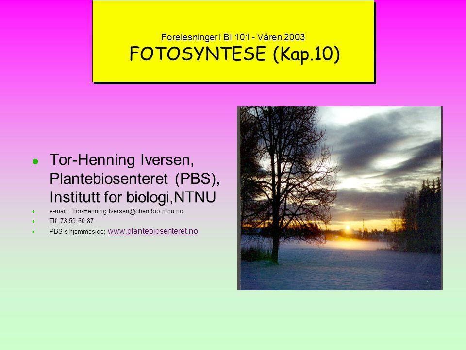 Forelesninger i BI 101 - Våren 2003 FOTOSYNTESE (Kap.10)