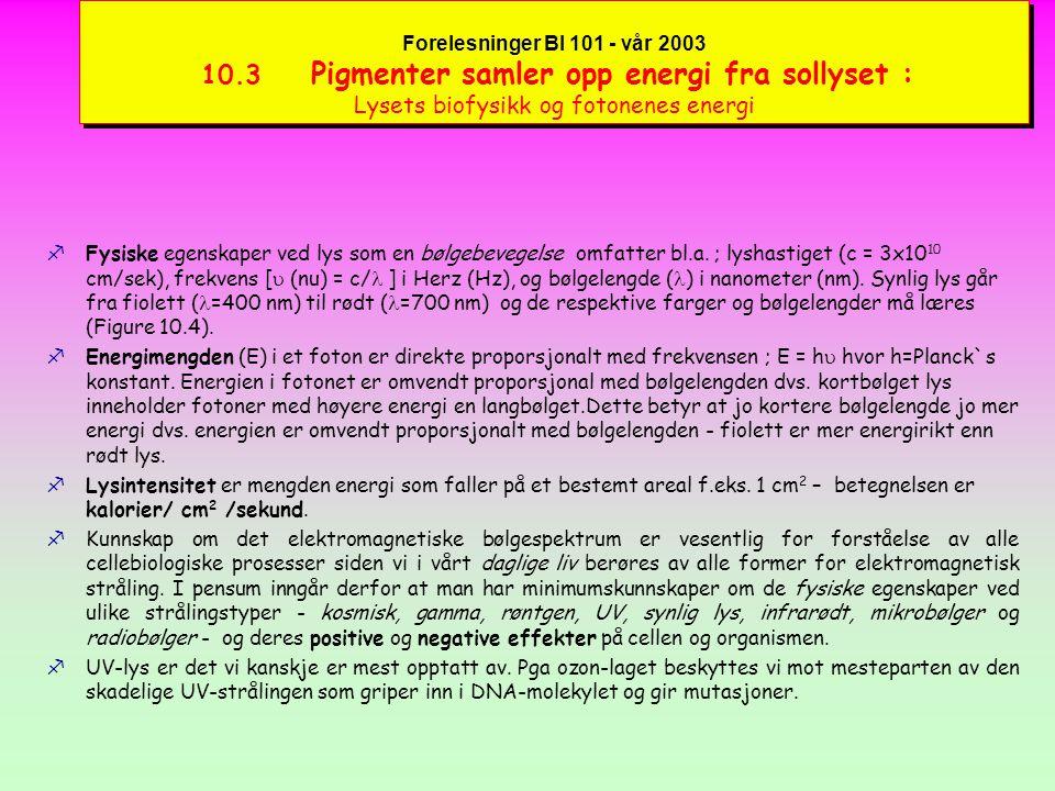 Forelesninger BI 101 - vår 2003 10.3 Pigmenter samler opp energi fra sollyset : Lysets biofysikk og fotonenes energi