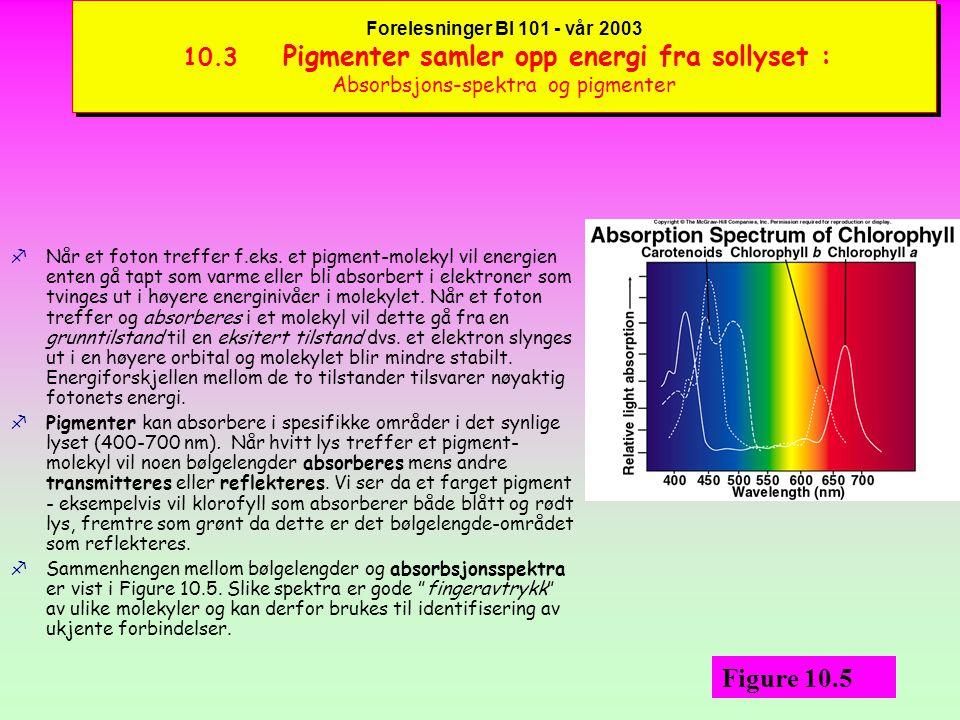 Forelesninger BI 101 - vår 2003 10.3 Pigmenter samler opp energi fra sollyset : Absorbsjons-spektra og pigmenter