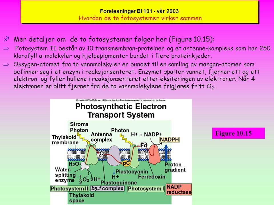 Mer detaljer om de to fotosystemer følger her (Figure 10.15):