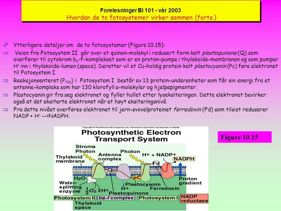 Forelesninger BI 101 - vår 2003 Hvordan de to fotosystemer virker sammen (forts.)