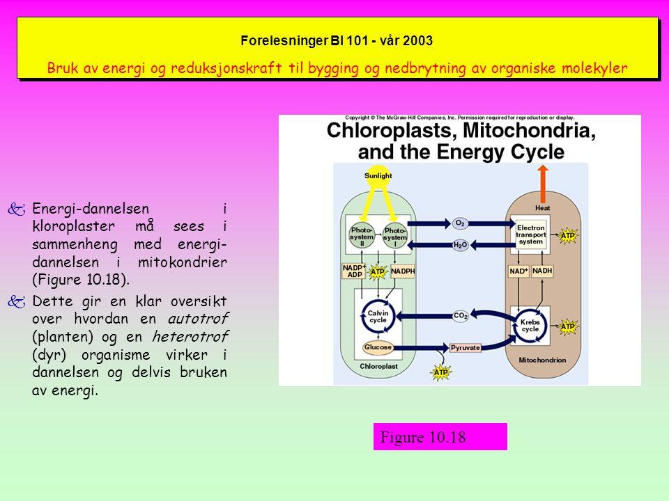 Forelesninger BI 101 - vår 2003 Bruk av energi og reduksjonskraft til bygging og nedbrytning av organiske molekyler