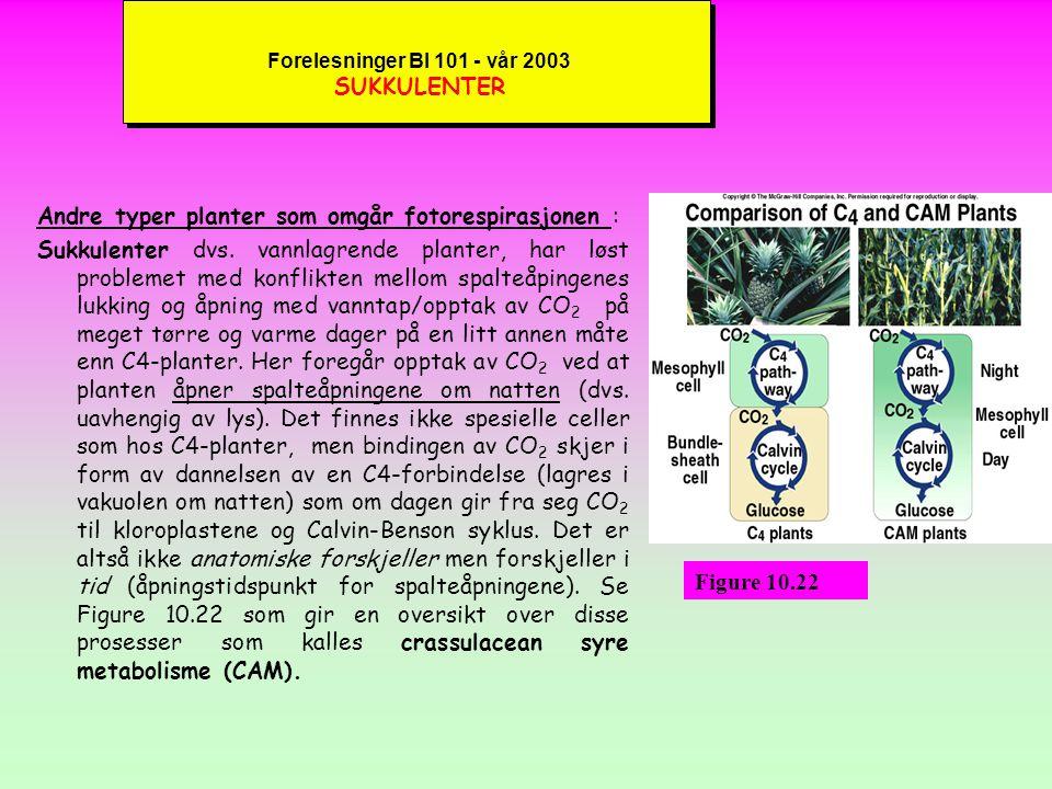 Forelesninger BI 101 - vår 2003 SUKKULENTER