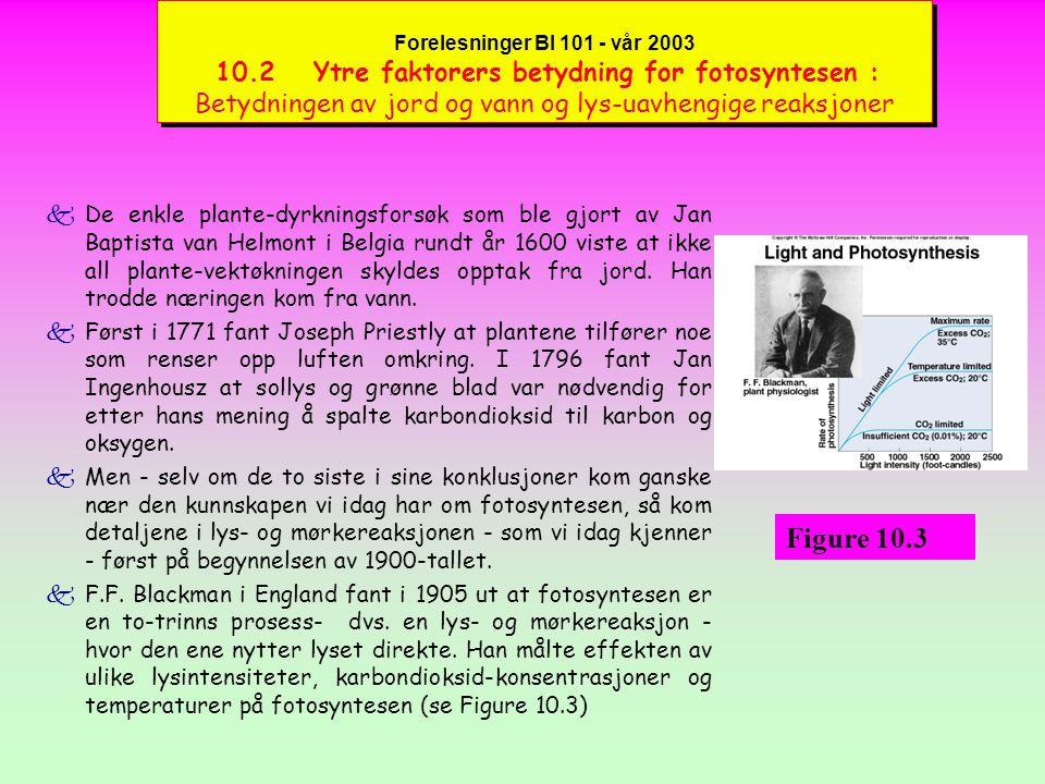 Forelesninger BI 101 - vår 2003 10.2 Ytre faktorers betydning for fotosyntesen : Betydningen av jord og vann og lys-uavhengige reaksjoner