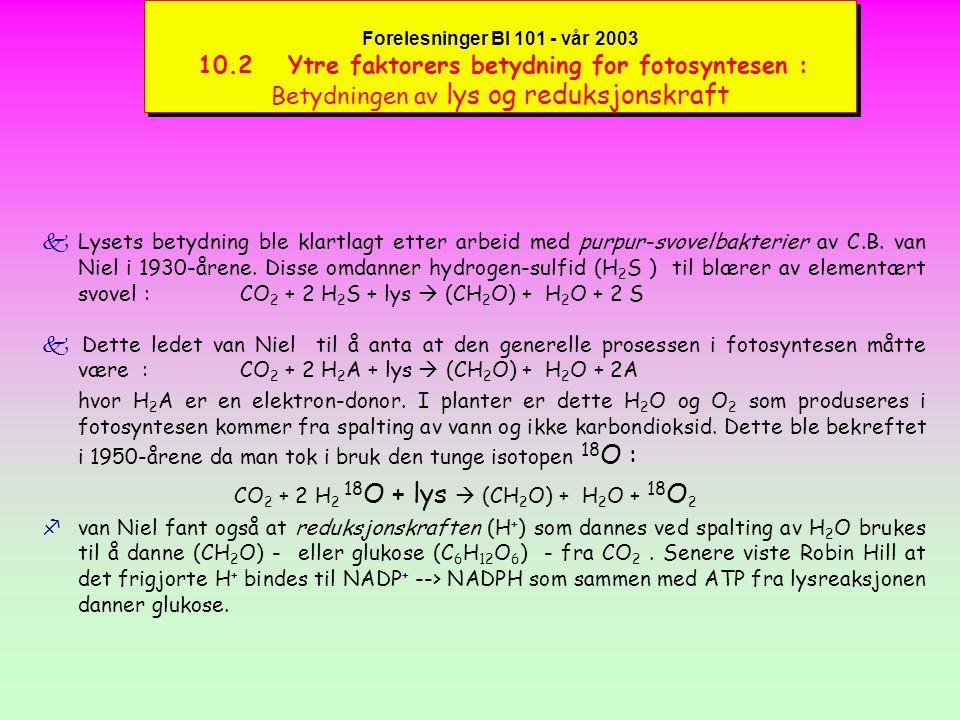 CO2 + 2 H2 18O + lys  (CH2O) + H2O + 18O2