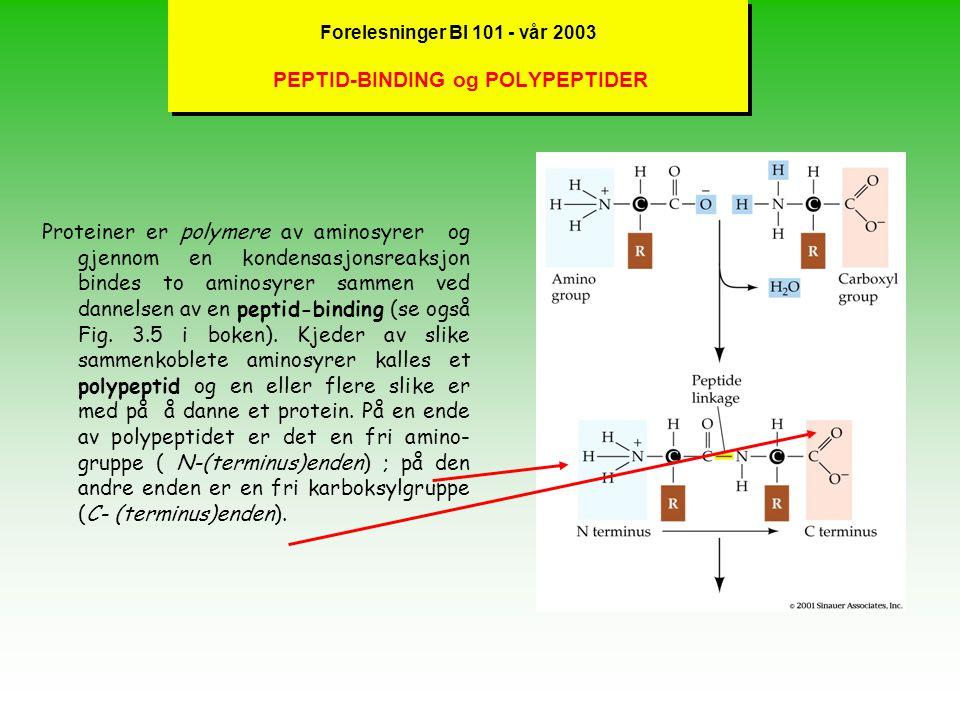 Forelesninger BI 101 - vår 2003 PEPTID-BINDING og POLYPEPTIDER