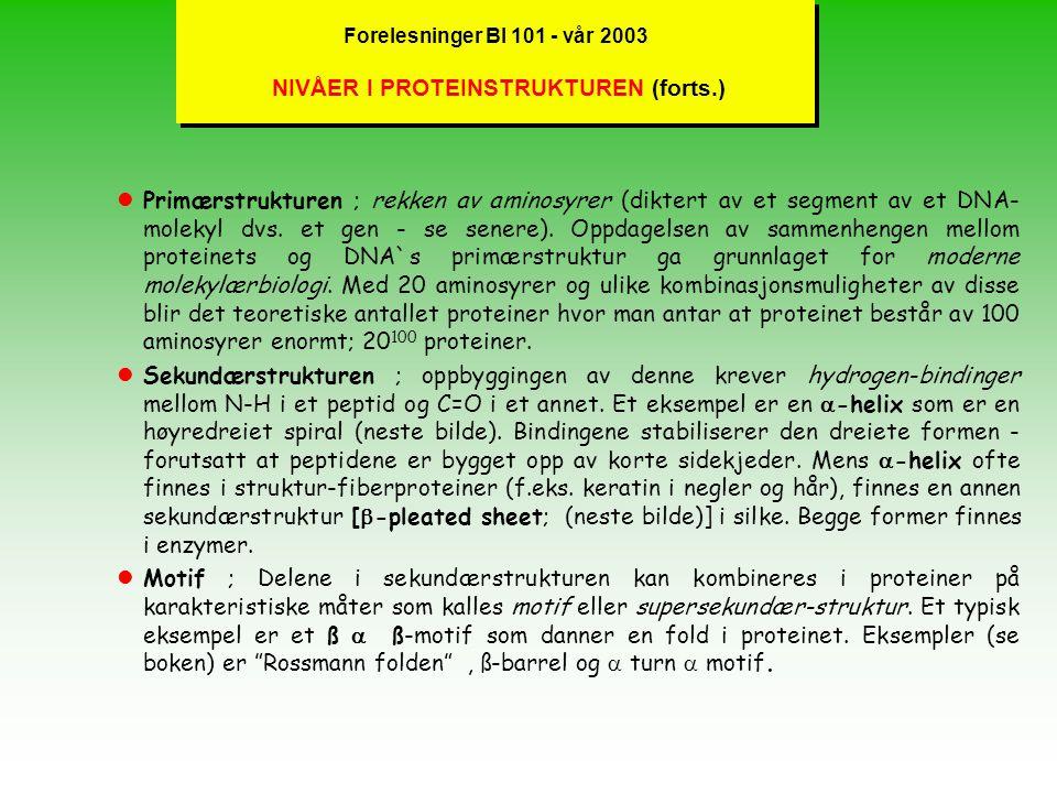 Forelesninger BI 101 - vår 2003 NIVÅER I PROTEINSTRUKTUREN (forts.)