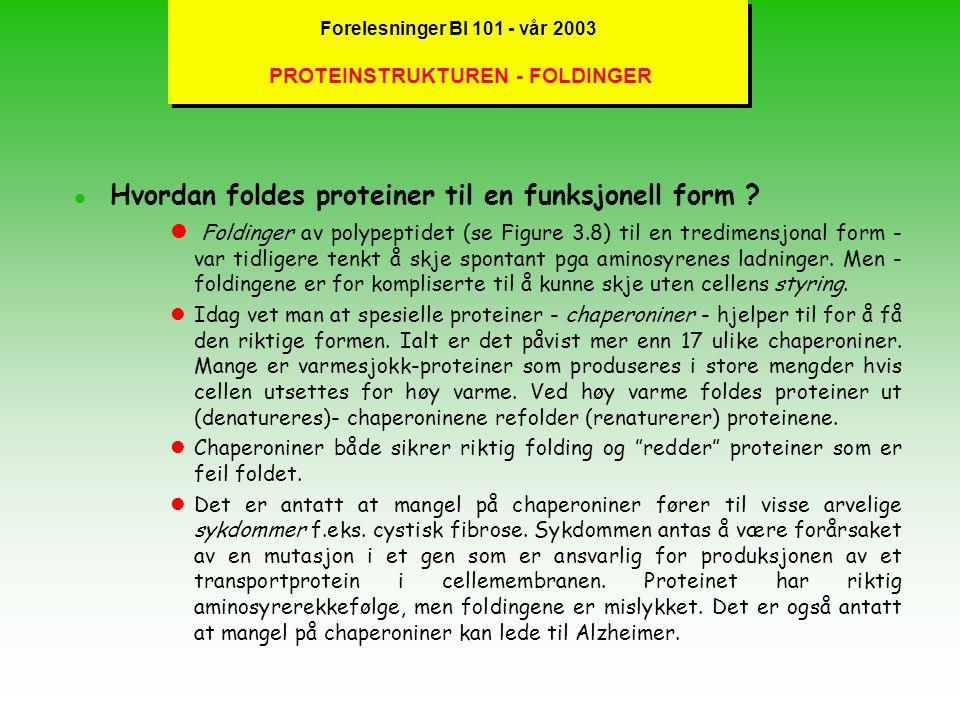 Forelesninger BI 101 - vår 2003 PROTEINSTRUKTUREN - FOLDINGER