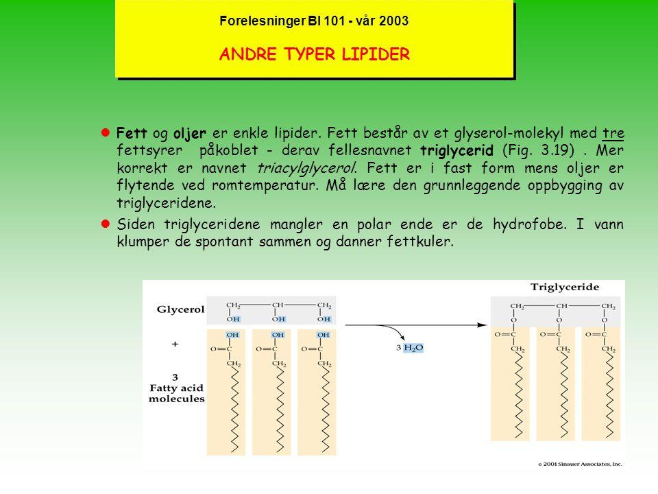 Forelesninger BI 101 - vår 2003 ANDRE TYPER LIPIDER
