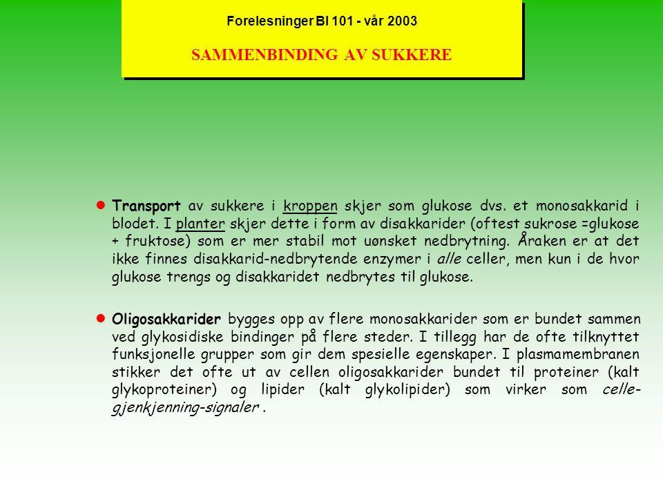 Forelesninger BI 101 - vår 2003 SAMMENBINDING AV SUKKERE