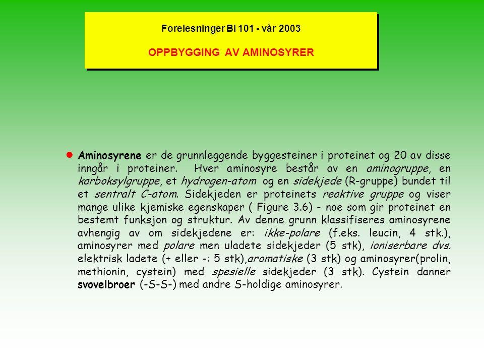 Forelesninger BI 101 - vår 2003 OPPBYGGING AV AMINOSYRER