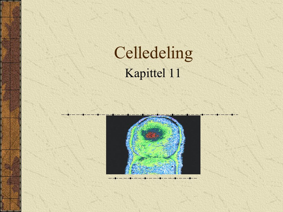 Celledeling Kapittel 11