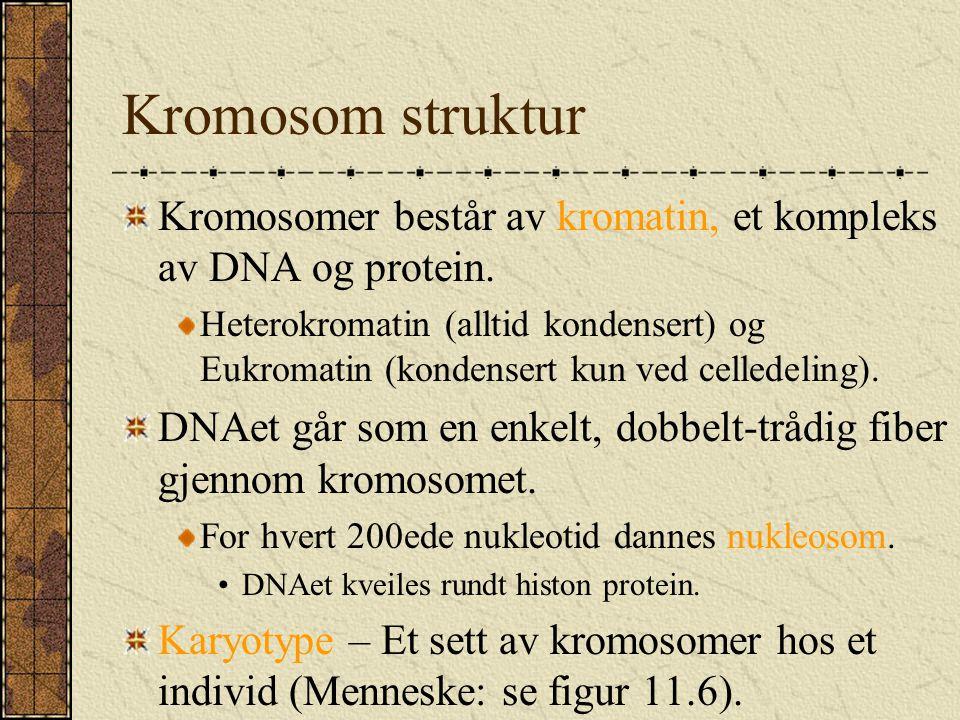 Kromosom struktur Kromosomer består av kromatin, et kompleks av DNA og protein.
