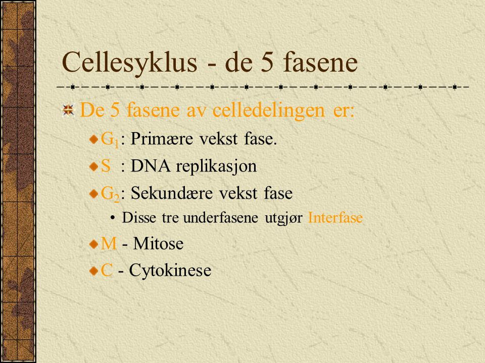 Cellesyklus - de 5 fasene