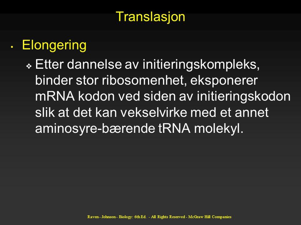Translasjon Elongering