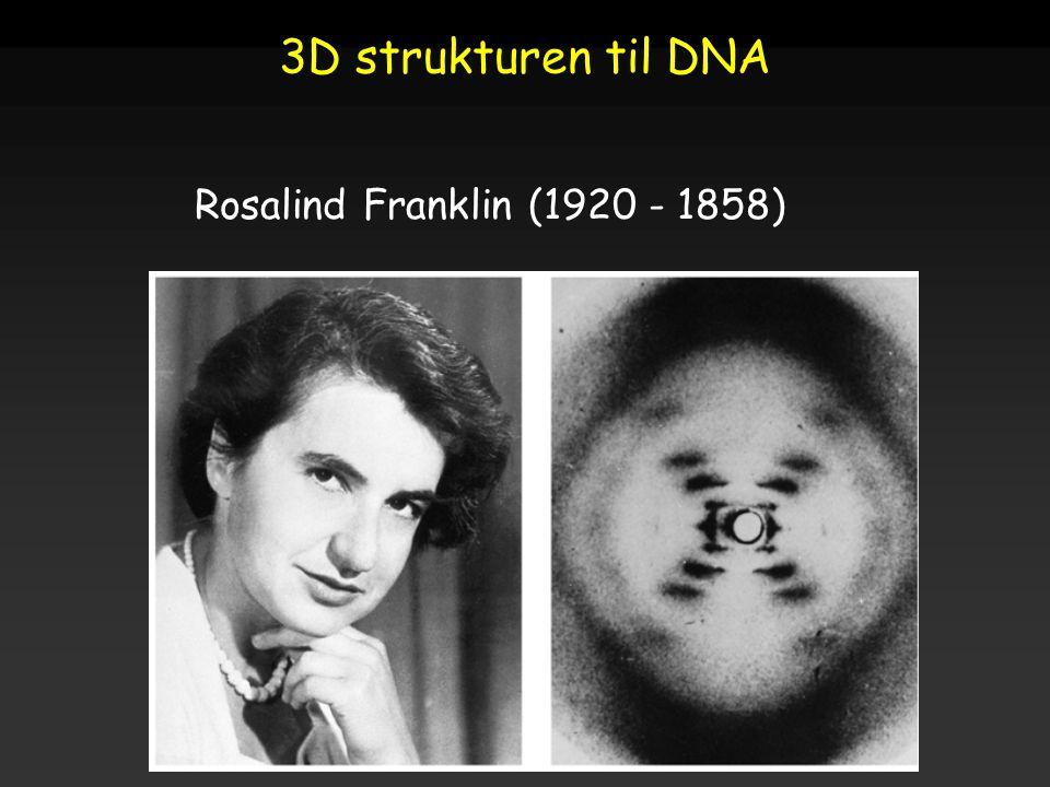 3D strukturen til DNA Rosalind Franklin (1920 - 1858)
