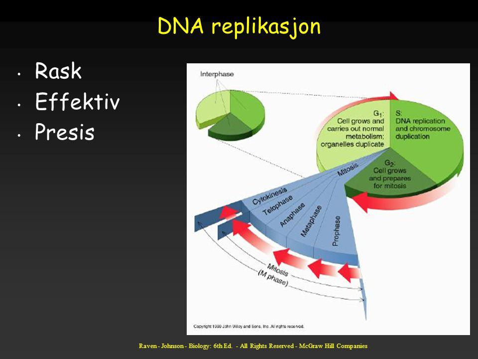 DNA replikasjon Rask Effektiv Presis