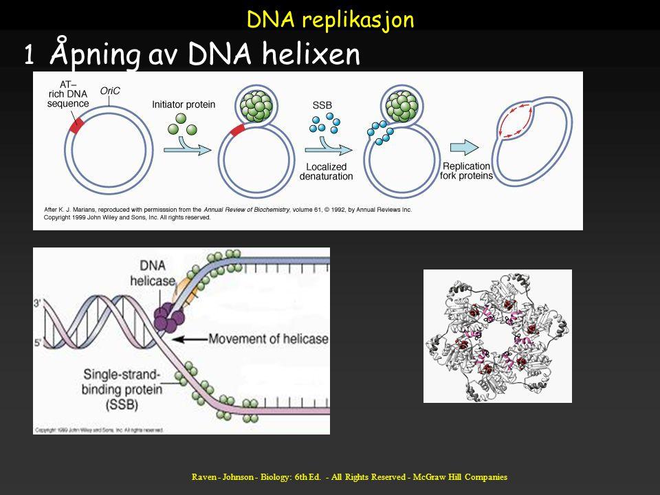 Åpning av DNA helixen DNA replikasjon