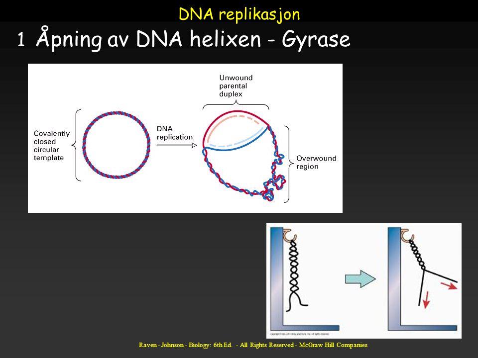Åpning av DNA helixen - Gyrase