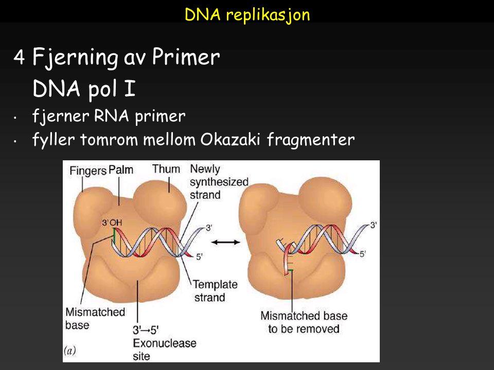 Fjerning av Primer DNA pol I DNA replikasjon fjerner RNA primer