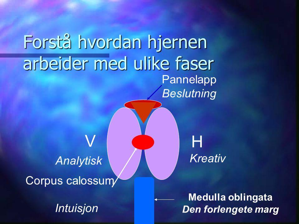 Forstå hvordan hjernen arbeider med ulike faser