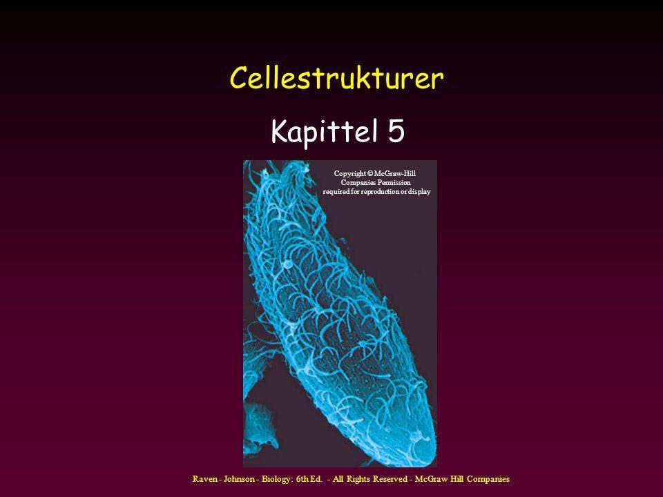 Cellestrukturer Kapittel 5
