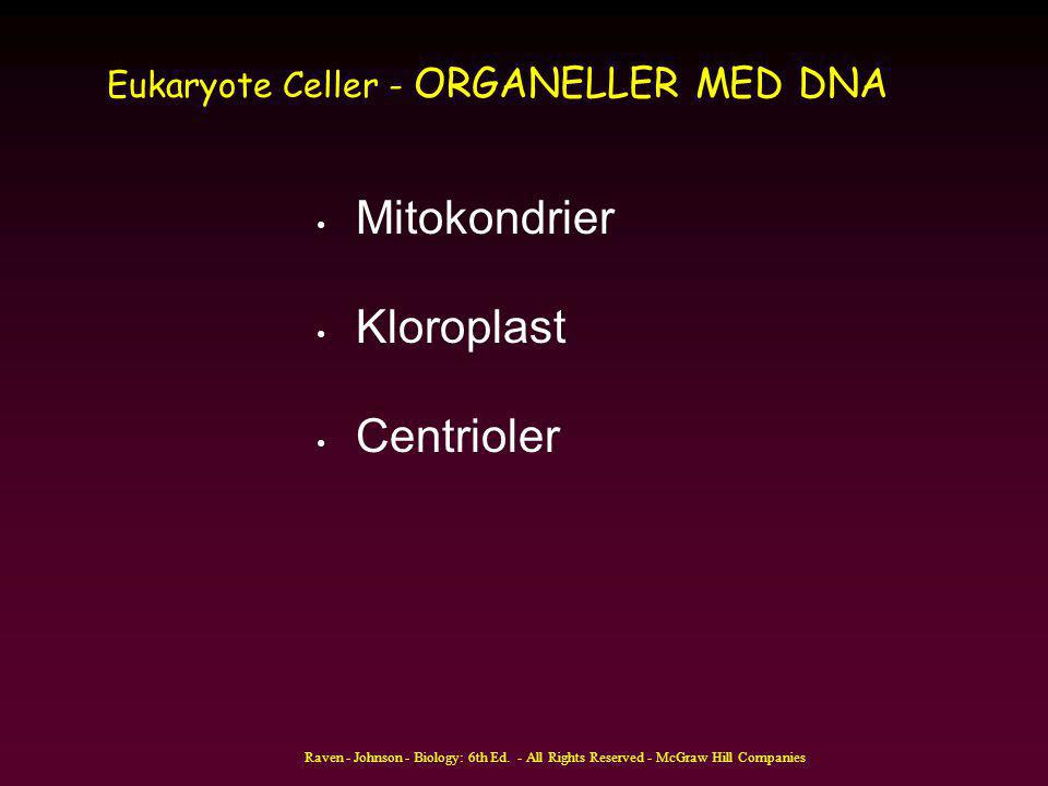 Eukaryote Celler - ORGANELLER MED DNA