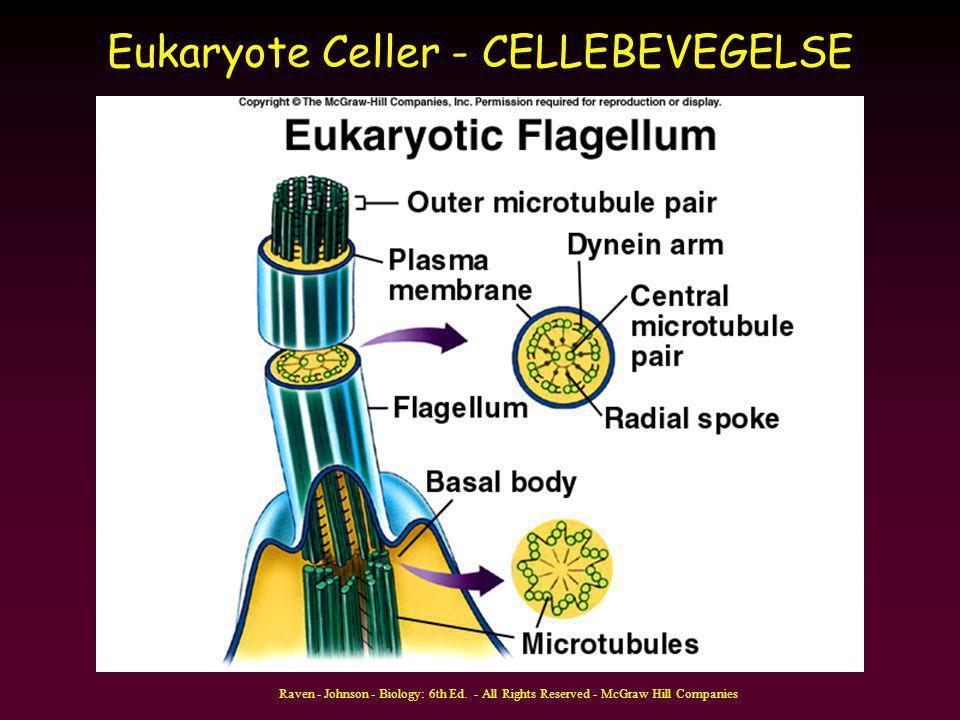 Eukaryote Celler - CELLEBEVEGELSE