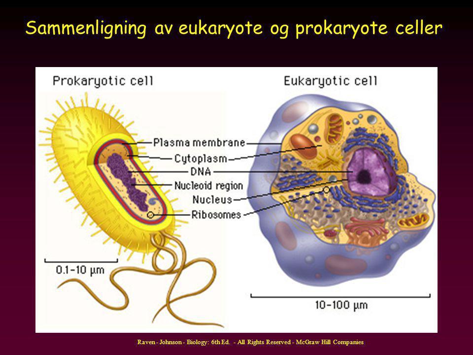 Sammenligning av eukaryote og prokaryote celler