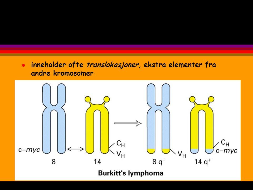 inneholder ofte translokasjoner, ekstra elementer fra andre kromosomer