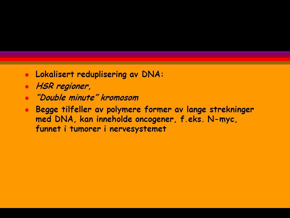 Lokalisert reduplisering av DNA: