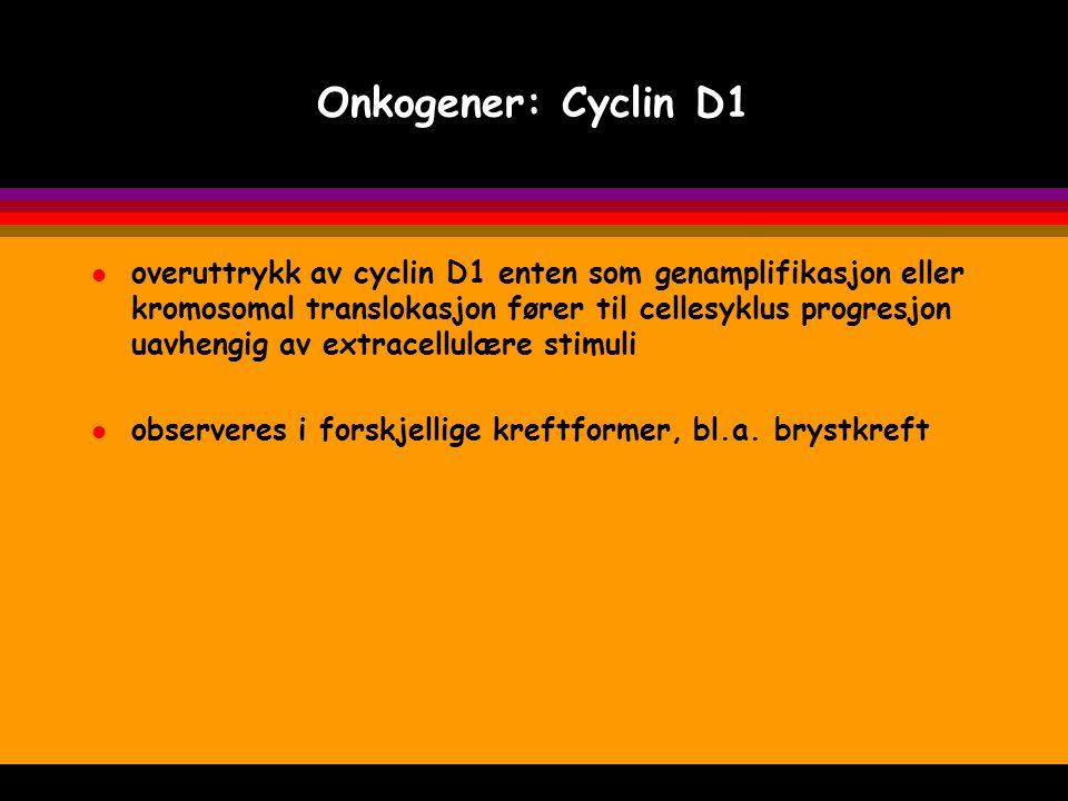 Onkogener: Cyclin D1