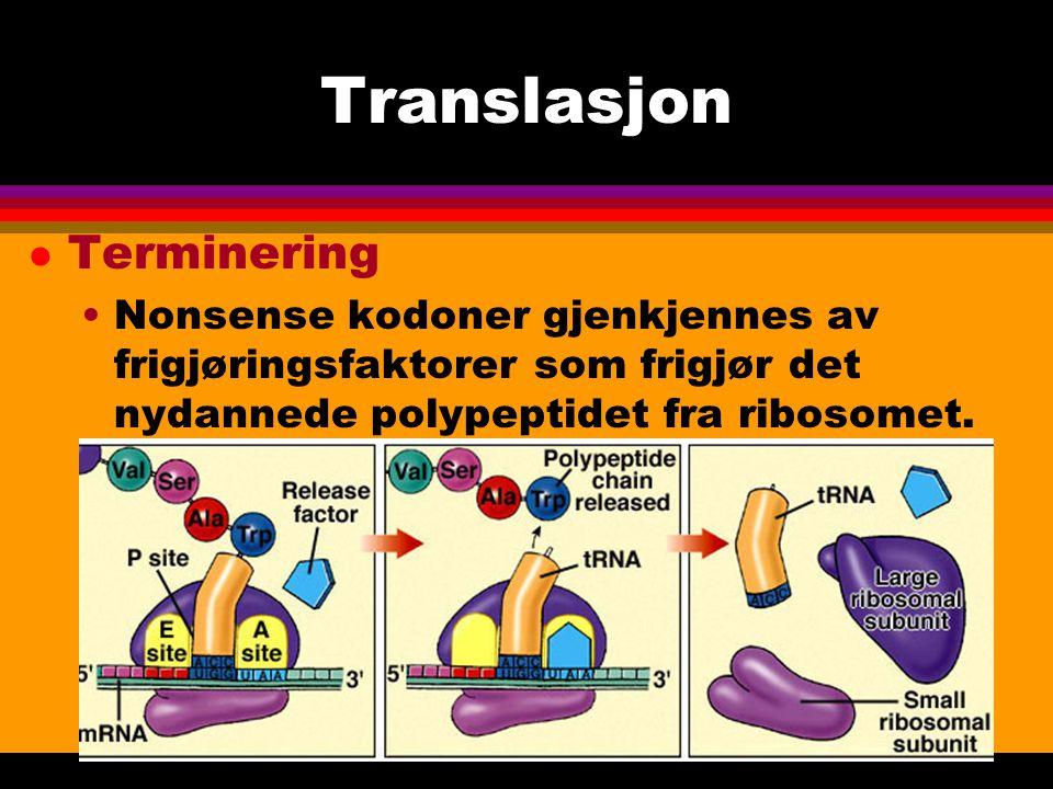Translasjon Terminering