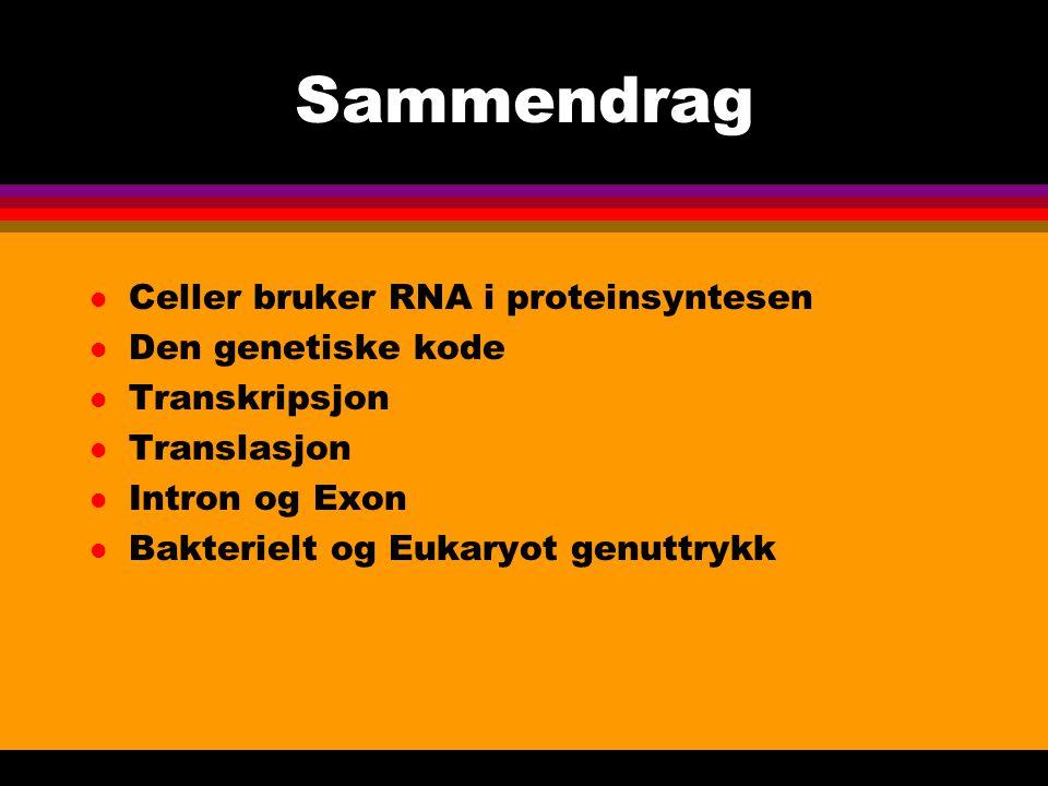 Sammendrag Celler bruker RNA i proteinsyntesen Den genetiske kode