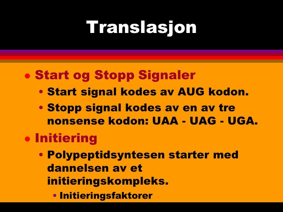 Translasjon Start og Stopp Signaler Initiering