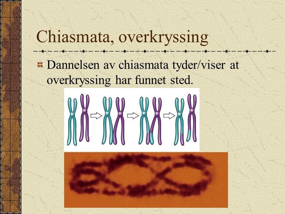 Chiasmata, overkryssing