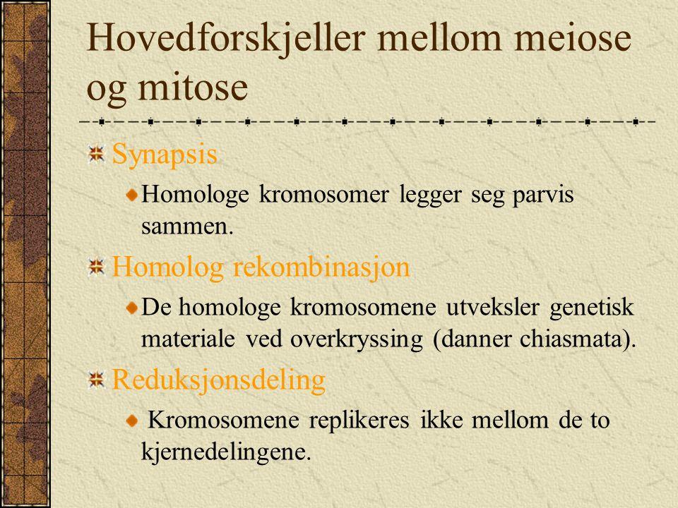 Hovedforskjeller mellom meiose og mitose