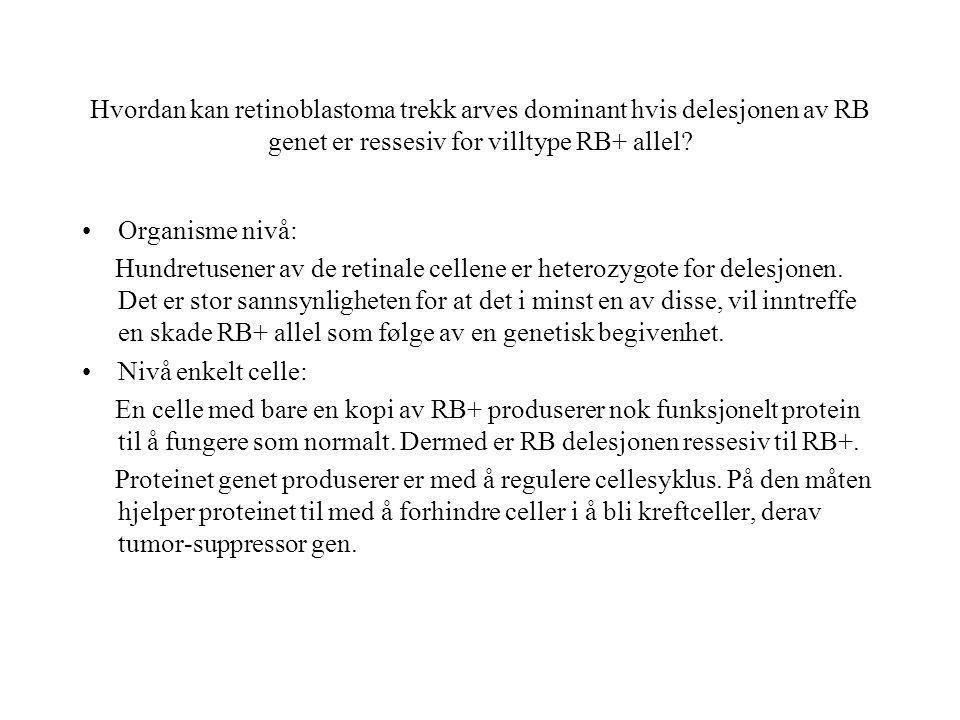 Hvordan kan retinoblastoma trekk arves dominant hvis delesjonen av RB genet er ressesiv for villtype RB+ allel