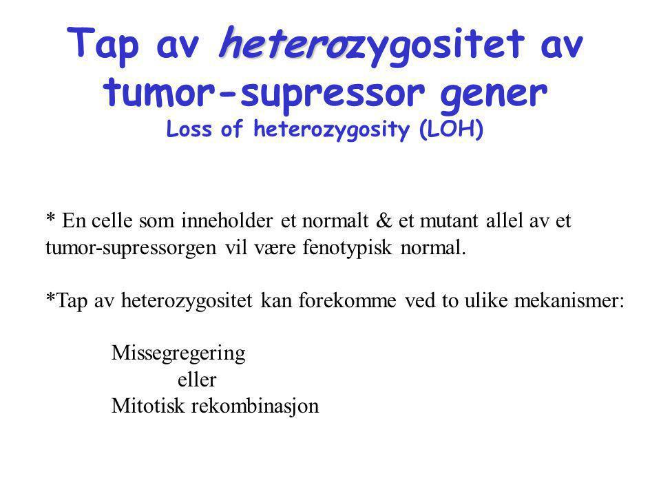 Tap av heterozygositet av tumor-supressor gener Loss of heterozygosity (LOH)