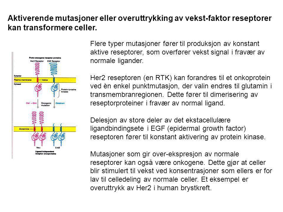 Aktiverende mutasjoner eller overuttrykking av vekst-faktor reseptorer