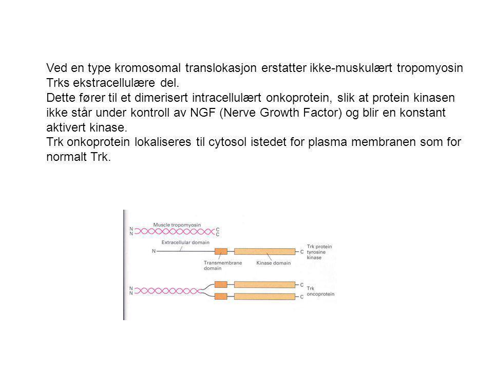 Ved en type kromosomal translokasjon erstatter ikke-muskulært tropomyosin Trks ekstracellulære del.