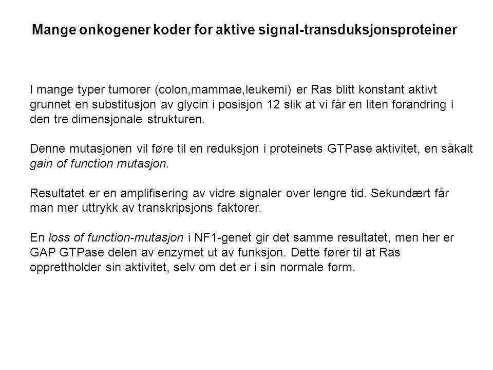 Mange onkogener koder for aktive signal-transduksjonsproteiner