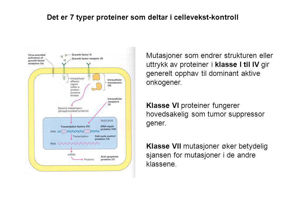 Det er 7 typer proteiner som deltar i cellevekst-kontroll